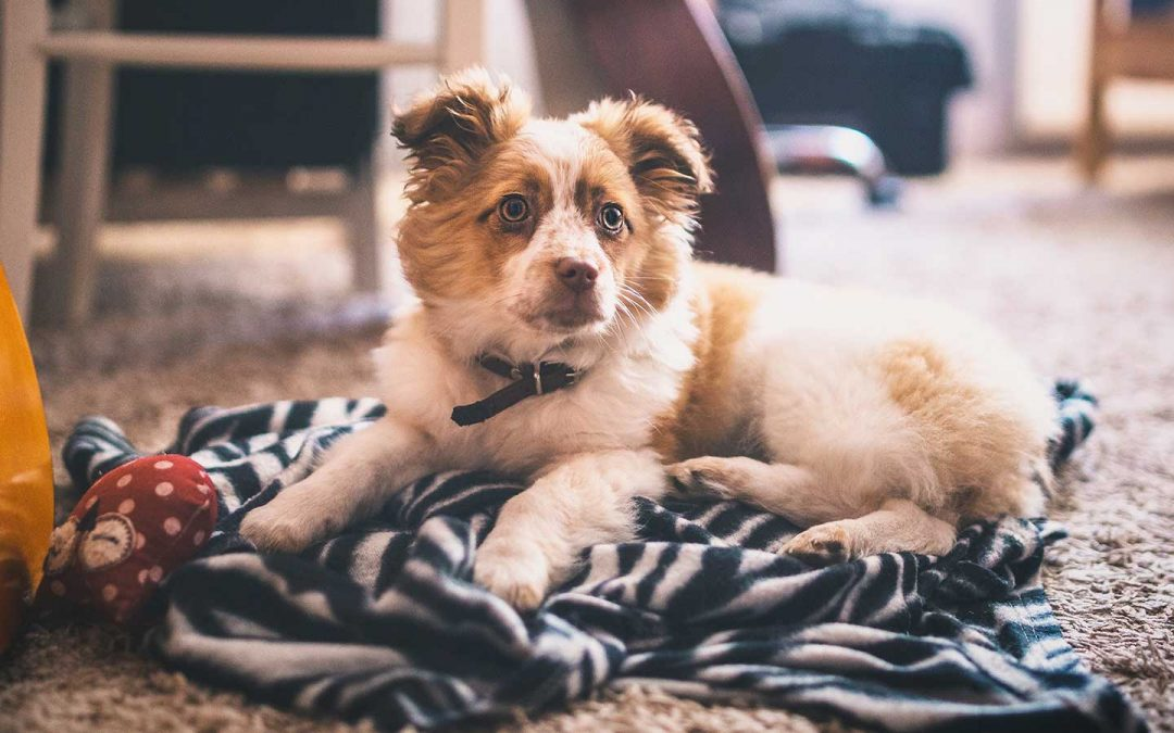 CARPET CLEANING GUIDE FOR HOMES WITH PETS